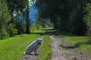 dog-110090
